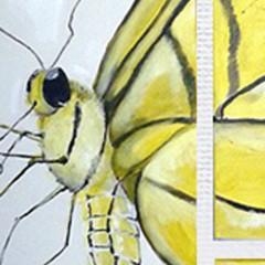 butterfly destc